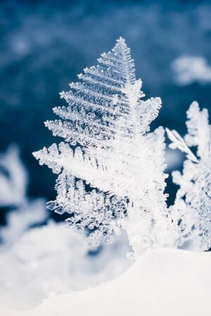 solidify: Close-up of filigrane ice crystals of real snow flake.