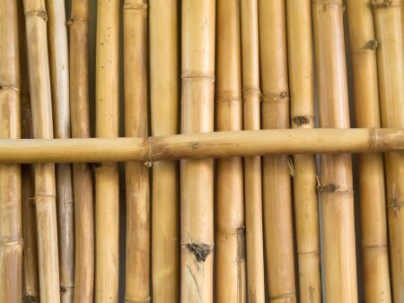 Background texture pattern of many parallel dried bamboo stick stalks with one lying across photo