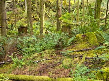 Lush green secondary rainforest growth on Canadas western Pacific coast in British Columbia Stock Photo
