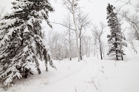 Snowy backcountry winter trail in boreal forest taiga of Yukon Territory Canada photo