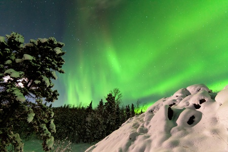 Spectacular display of intense Northern Lights or Aurora borealis or polar lights forming green swirls over snowy boreal forest  taiga of Yukon Territory  Canada winter landscape Stock Photo - 17840807
