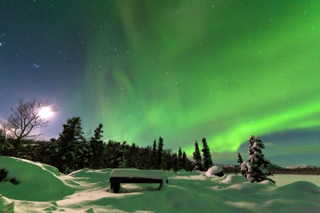 Spectacular display of intense Northern Lights or Aurora borealis or polar lights forming green swirls over snowy bench at the edge of boreal forest  taiga of Yukon Territory  Canada winter landscape