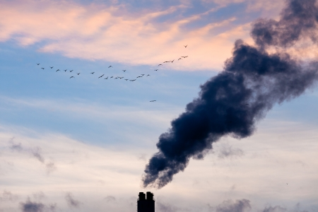 carbon emission: A flock of birds fly past smokestack chimneys belching black smoke and pollutants in blue evening sky  Stock Photo