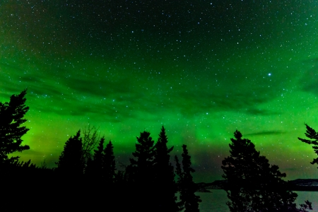 Green glowing display of Northern Lights or Aurora borealis or polar lights in night sky full of stars over taiga forest photo