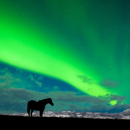 horse in snow: Silhouette of horse on pasture in moon-lit night with distant snowy mountain range and spectacular display of Northern Lights  Aurora borealis  above on starry night sky Stock Photo