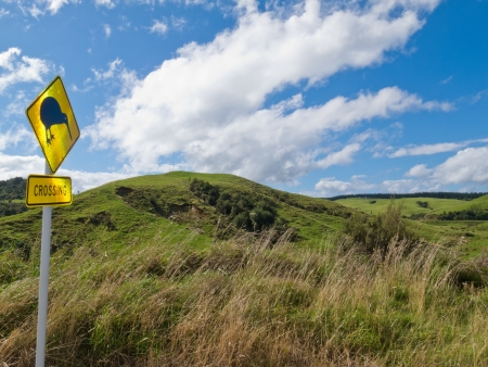 rural road: New Zealand Road Sign  Rural farmland landscape with Attention Kiwi Crossing warning motorist to watch out for this endangered icon of NZ Stock Photo
