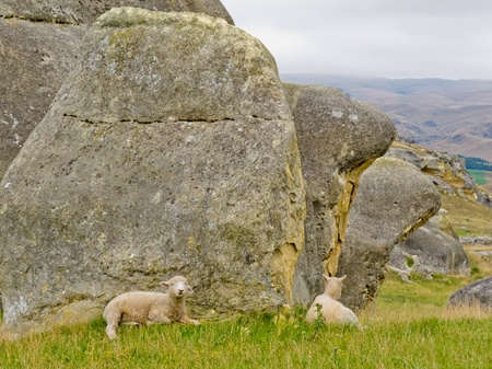 Sheep on mountain pasture grazing on lush green grass at the foot of large granite boulders on south island of New Zealand photo