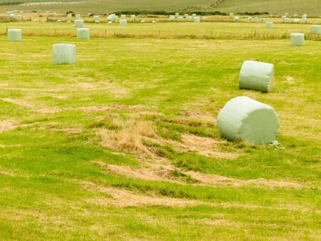 fermenting: Harvesting cut grass for hay with a newly mown agricultural field covered in scattered circular hay bales wrapped in green plastic for exterior storage and fermenting silage