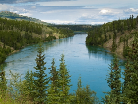 Yukon River just north of Whitehorse  Yukon Territory  Canada  a major stream and waterway in Alaska and the Yukon 免版税图像
