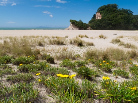 Scenic coastline beach landscape of Coromandel Peninsula  North Island of New Zealand photo