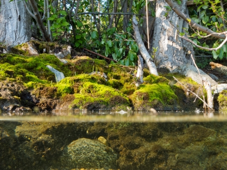 Riparian habitat ecosystem of forest lake shore with tree roots moss and aquatic plants in a over under split underwater view 免版税图像