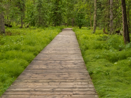 bc: Forest wetland wooden boardwalk in boreal forest taiga of northern British Columbia  Canada Stock Photo