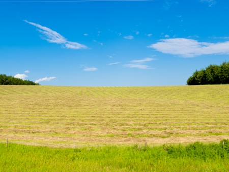 Freshly cut hay in rows on agricultural meadow with blue sky and some clouds agriculture farmland landscape  Alberta  Canada photo