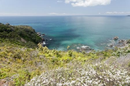 Mooie kustlandschap van Tawharanui schiereiland, Noord-Eiland van Nieuw-Zeeland, met bloeiende manuka, inheemse NZ teatree, op de voorgrond