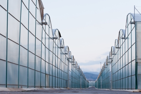 Large scale commercial greenhouses for agricultural veggie production in two endless rows reaching horizon Stock Photo