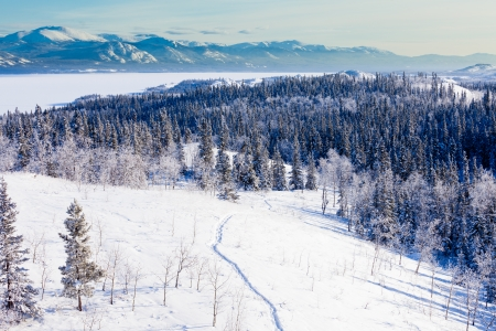 Snow-shoe trail in boreal forest taiga winter wilderness landscape of Yukon Territory, Canada, north of Whitehorse photo
