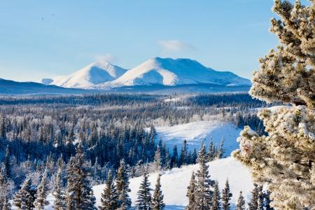 Besneeuwde boreale bossen taiga winter wildernis landschap van Yukon Territory, Canada, ten noorden van Whitehorse Stockfoto
