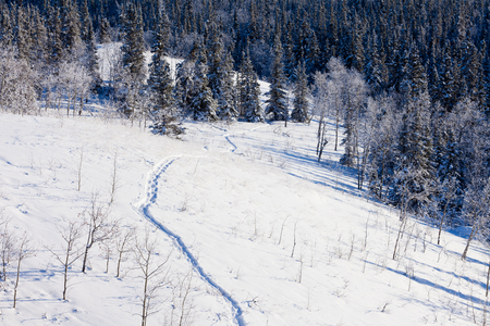 Snow-shoe trail prints in deep powder snow of pristine winter wonderland boreal forest taiga wilderness photo