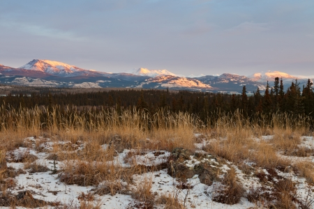 bleak: Early winter sunset mountains boreal forest taiga wilderness landscape of the Yukon Territory, Canada