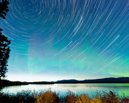 aurora polaris: Astrophotography star trails on midsummer night sky with Aurora borealis or Northern Lights over shore willow bush at Lake Laberge, Yukon Territory, Canada