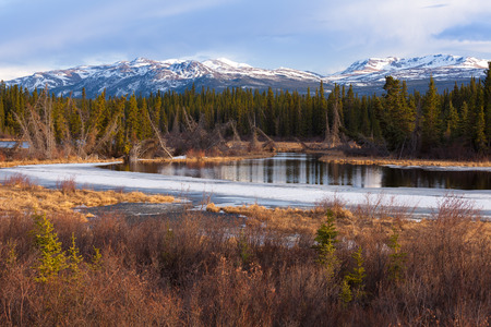 Boreal forest taiga wetland marsh spring thaw in Yukon Territory, Canada photo