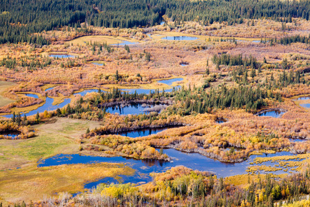 yukon: Aerial view of wet marshland in autumn fall colored boreal forest taiga of Yukon Territory, Canada Stock Photo