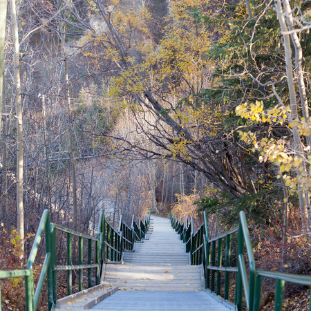 Nature trail with steep endless downward stairs in a forest in late autumn fall Stock Photo - 27122634