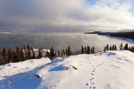 Steaming Lake Laberge, Yukon Territory, Canada, on icy winter day before freezing over with fox tracks in snow on shore 写真素材