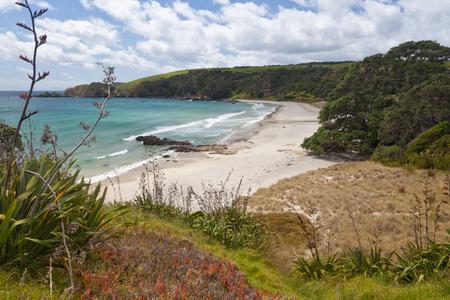 new zealand beach: Sand beach landsacpe of Tawharanui Peninsula, North Island of New Zealand