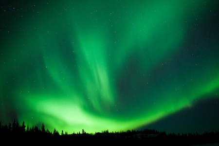 borealis: Intense green northern lights, Aurora borealis, on night sky with stars over boreal forest taiga, Yukon, Canada