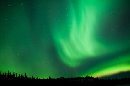 boreal: Intense green northern lights, Aurora borealis, on night sky with stars over boreal forest taiga, Yukon, Canada
