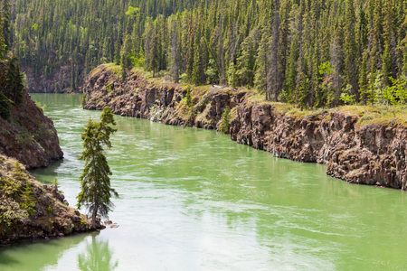 boreal: Miles Canyon Yukon River rock cliffs in dense boreal forest taiga just South of the city of Whitehorse, Yukon Territory, Canada