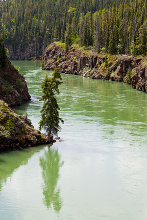boreal: Miles Canyon of Yukon River rock cliffs in dense boreal forest taiga just South of the city of Whitehorse Yukon, Territory, Canada