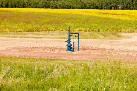 wellhead: Natural gas wellhead in a meadow of green grassland field agricultural farmland in Alberta, Canada