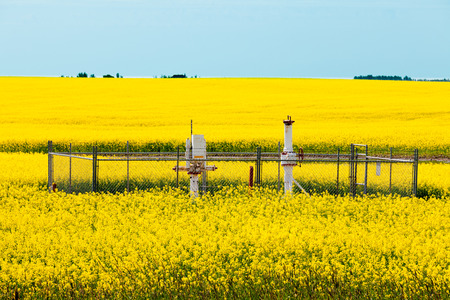 alberta: Natural gas wellheads in yellow blooming canola rapeseed field agricultural farmland in Alberta, Canada
