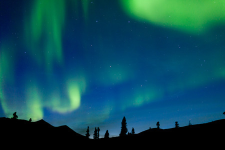 Moving bands of Aurora borealis or Polar lights dance on night sky over boreal forest taiga spruce trees of Yukon Territory, Canada photo