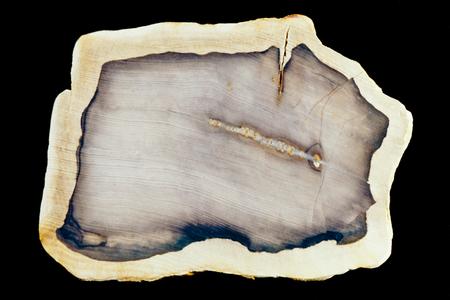 petrified fossil: Polished surface of slab of fossilized petrified wood beautiful geology nature background pattern