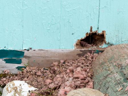 ratones: Exterior pared de la casa del ratón roedor daños de plagas madriguera desordenado