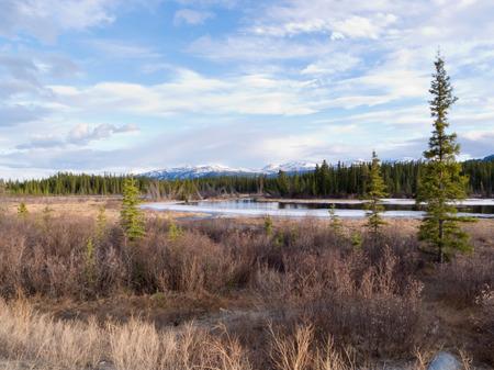 Boreal foresta taiga zona umida palustre disgelo primaverile nel territorio dello Yukon, Canada Archivio Fotografico - 42624877