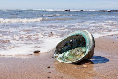 虹色の真珠マザーオブ パールの内部を示す大きな Perlemoen アワビの貝殻太平洋海岸、アメリカのカリフォルニアのビーチの上に洗浄 写真素材