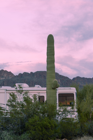 sonoran desert: Motorhome RV parked on campsite in Sonoran Desert beside Saguaro Cactus