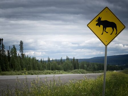 posted: Yellow diamond traffic road sign warning, Attention moose crossing, posted alongside a scenic rural country road in lush countryside