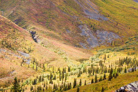 boreal: High mountain valley at timber line where alpine tundra begins and boreal forest taiga ends