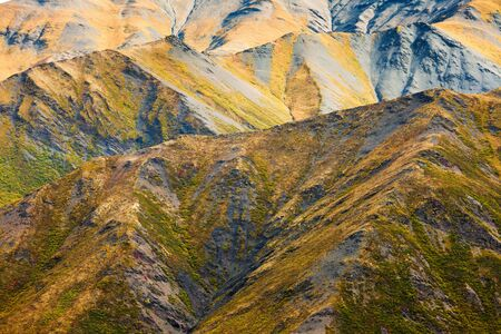alpine tundra: Nature background of fall colored alpine tundra habitat in high mountain range