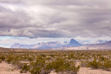 creosote: Fresh snow in distant Chisos Mountains, landscape in Chihuahuan Desert of Big Bend National Park, Texas, US.