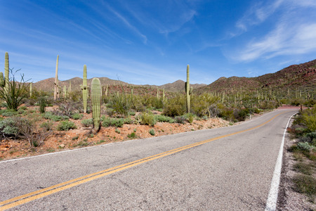 Empty winding highway road in Saguaro National Park near Tucson, Arizona, US, with green Sonoran Desert vegetation and iconic Saguaro cacti, Carnegiea gigantea