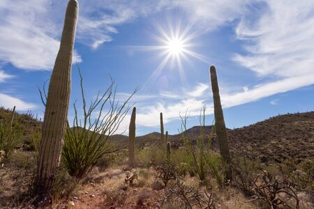 sonoran desert: Hot sun over Saguaro National Park near Tucson, Arizona, US, between green Sonoran Desert vegetation and iconic Saguaro cacti, Carnegiea gigantea Stock Photo