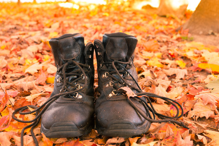 shoestrings: Well worn leather hiking boots in yellow orange colored autumn forest ready to go on a hike