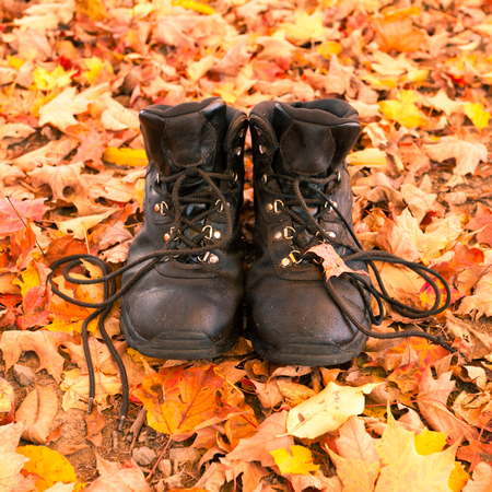 shoestrings: Well worn leather hiking boots on fall colored autumn leaves in forest ready to be taken on a hike