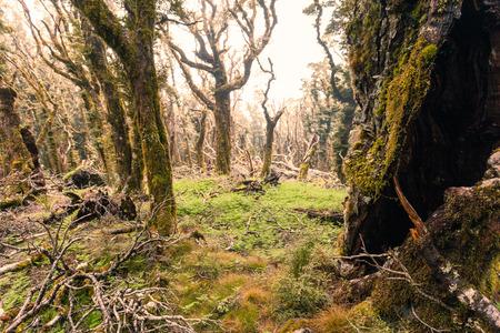 marlborough: Virgin mountain rainforest wilderness of Marlborough, New Zealand